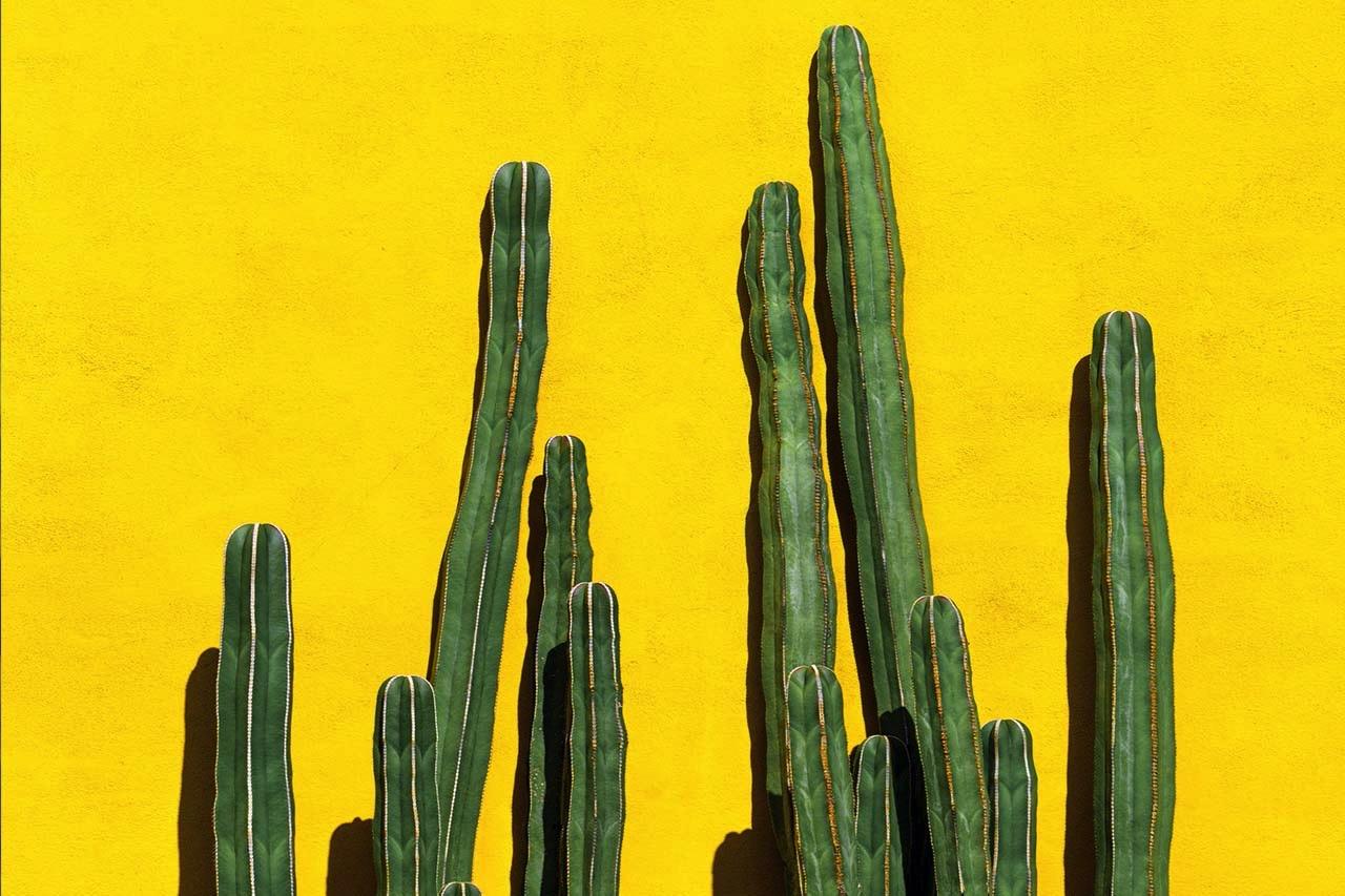 moramore I Großer Penis I Kaktus
